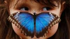 А ви знаєте, чим харчуються метелики?