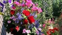 Ампельні рослини для саду, тераси, альтанки