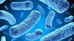Бакпосів на мікрофлору і чутливість до антибіотиків: підстави для призначення аналізу, розшифровка