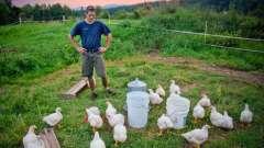 """Що значить """"курчат по осені рахують""""? Тлумачення прислів`я"""