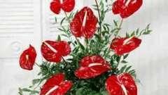 Квіткова композиція, своїми руками створена: основні правила складання і корисні поради