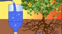 Дачні хитрості і не тільки: як організувати крапельний полив з пластикових пляшок своїми руками