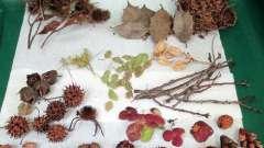 Робимо аплікації з природних матеріалів своїми руками. Варіанти виготовлення композицій з листя і черепашок