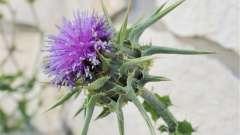 Дикорослі рослини: назва і значення