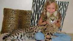 Домашні гепарди - кішки савани