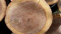 Деревина: властивості деревини різних порід