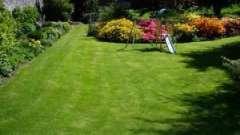 Чи є газонна трава, яку не треба стригти?