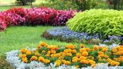 Де садити квіти? Невибагливі квіти для дачі