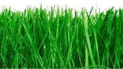 Ідеальний газон - як сіяти. Поради та рекомендації