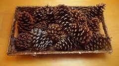 Цікаві і ошатні вироби з шишки напередодні новорічних свят