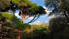 Південний берег криму - де краще відпочити? Огляд, опис, пляжі та відгуки туристів