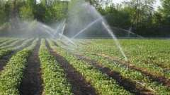 Як часто поливати полуницю і яка система зрошення краще?