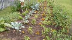 Як позбутися від бур`яну в городі? Подумаємо разом