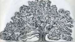 Як намалювати дуб: практичні рекомендації
