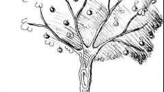 Як намалювати яблуню: простий спосіб