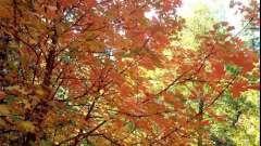 Як намалювати осінній пейзаж в кілька простих кроків?