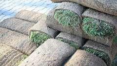 Як посадити газонну траву на дачі: підготовка, вибір культури, посадка