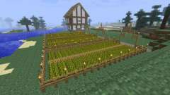 """Як посадити пшеницю в """"майнкрафт"""" і що для цього потрібно"""