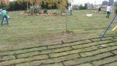 Як правильно посіяти газонну траву: підготовка, вибір культури і створення галявини