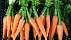 Як правильно садити морква - корисні поради