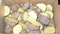 Як проростити картоплю для посадки? Картопля для посадки. Картопля перед посадкою