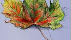 Як малювати листя олівцем і фарбами