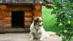 Як зробити будку для собаки своїми руками: основні моменти