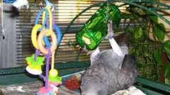 Як зробити іграшки для папуги своїми руками: огляд ідей, майстер-класи та рекомендації