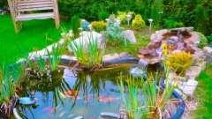 Як створити садовий ставок на ділянці?
