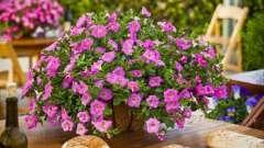 Як доглядати за петунією, щоб вона радувала пишним цвітінням?