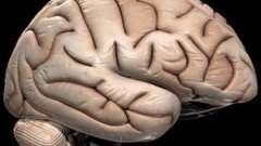 Як поліпшити кровообіг головного мозку. Препарати, що поліпшують кровообіг головного мозку