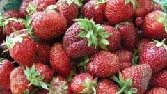 Як вибрати хороші сорти полуниці