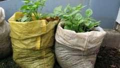 Як виростити картоплю в мішку? Способи вирощування картоплі