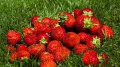 Як виростити полуницю з насіння: поради початківцям садівникам