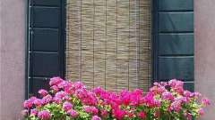 Які квіти посадити на балконі?