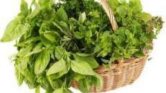 Які трави збирають в травні: перелік рослин і особливості їх заготовки