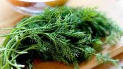 Калорійність кропу і його користь для нашого організму