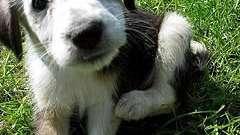 """Краплі """"адвантікс"""" для собак: надійний захист і профілактика нападу комах-паразитів і кліщів"""