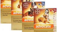 """Краплі """"адвокат"""" для собак: інструкція із застосування і відгуки"""