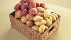 """Картопля """"роко"""": характеристика сорту, відгуки"""
