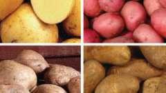 Картопля насіннєва: сорти (характеристика і опис)