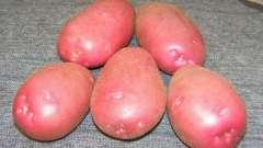 Картопля, сорт любава: опис сорту та відгуки