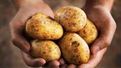 Картопля удача: характеристика сорту. Фото, відгуки, опис