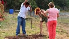 Коли садити дерева восени і як правильно це робити?