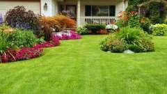 Коли сіяти газонну траву, знає не кожен