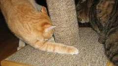 Когтеточки для кішок своїми руками: чи легко їх зробити