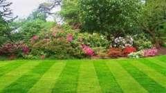 Красива і густа газонна трава проти бур`янів