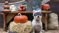 Щур і собака: сумісність в коханні, дружбі і діловій сфері
