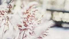Куди зникають на зиму трав`янисті рослини: особливості пристосування до умов існування