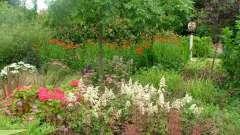 Культурні трави: назви. Лікарські культурні рослини і трави